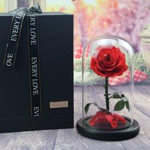 永 生 玫 瑰